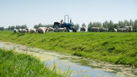 Boerderij schapen 1200x675